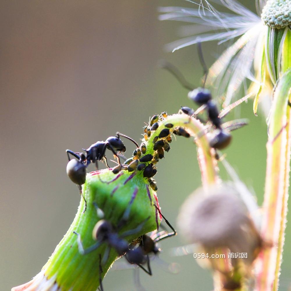 蚜虫的天敌等动物趣事