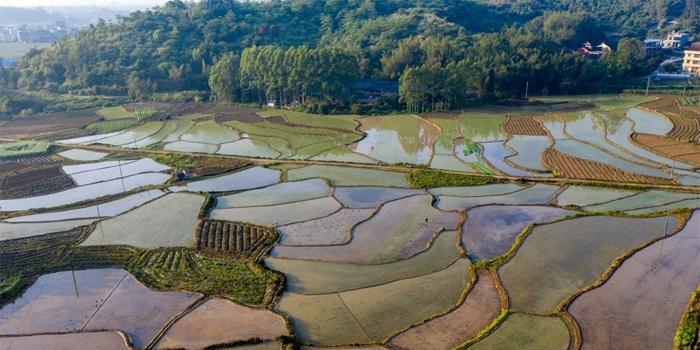 佩服莆田农民的智慧,把日子过成了诗