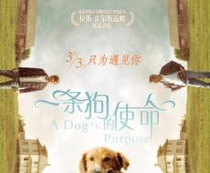 奥斯卡导演暖心力作《一条狗的使命》