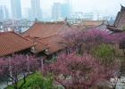 莆田市区里的桃花源,美到让人窒息