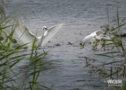 大米視覺:綬溪環境保護好,鳥類棲息天堂