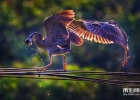 大米視覺:綬溪清晨,夜鷺(幼鳥)捕魚