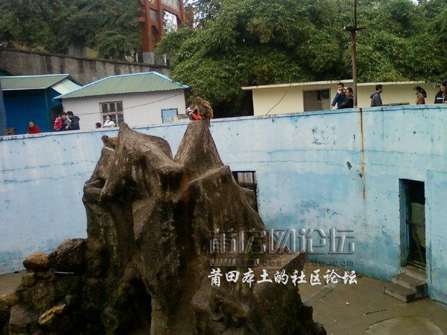 游春游凤凰山动物园