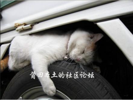 车周围的小动物