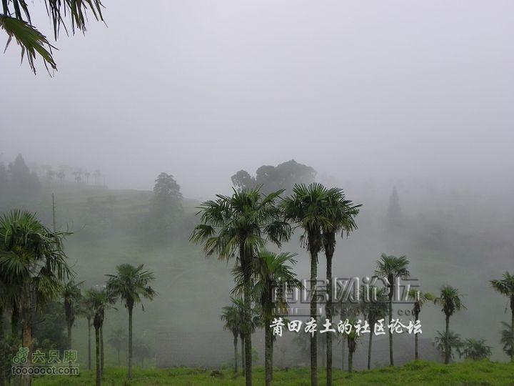 福建省莆田市涵江区大洋乡天气