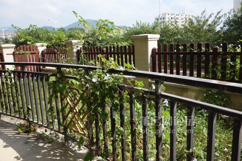 院子(露台)左侧花草地