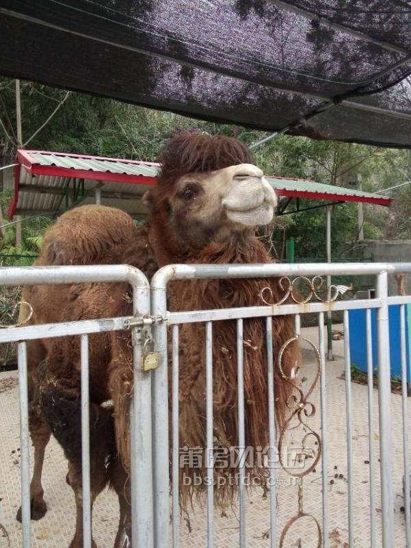 凤凰山动物园真没班头