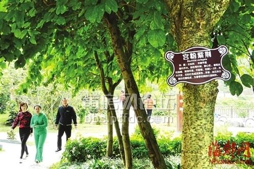 绶溪公园百种乔木挂上标识牌,市民可看牌识树