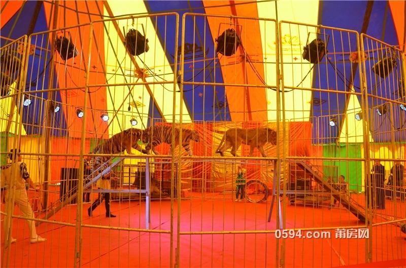此次俄罗斯皇家马戏团表演活动从1月19日持续到1
