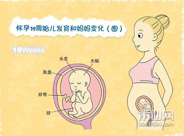 怀孕19周_孕五月19周
