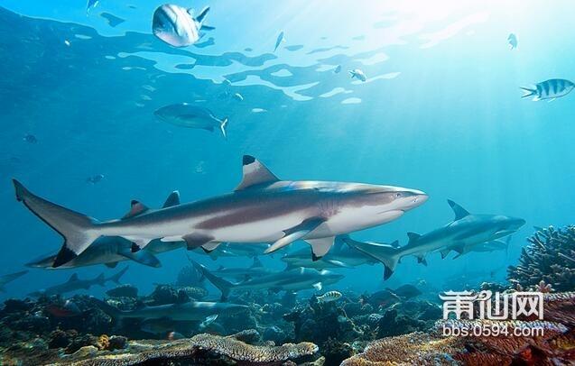 可爱的小鲨鱼怎么画
