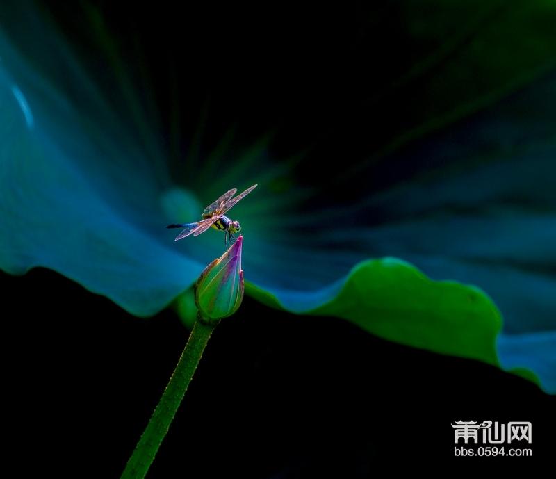 0-3.蜻蜓_MG_3321-.jpg