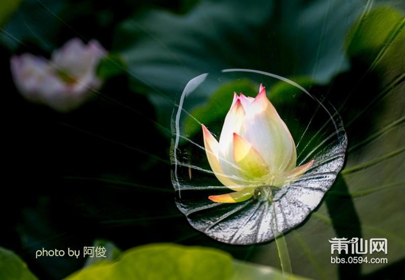 2.多曝_MG_3285.jpg
