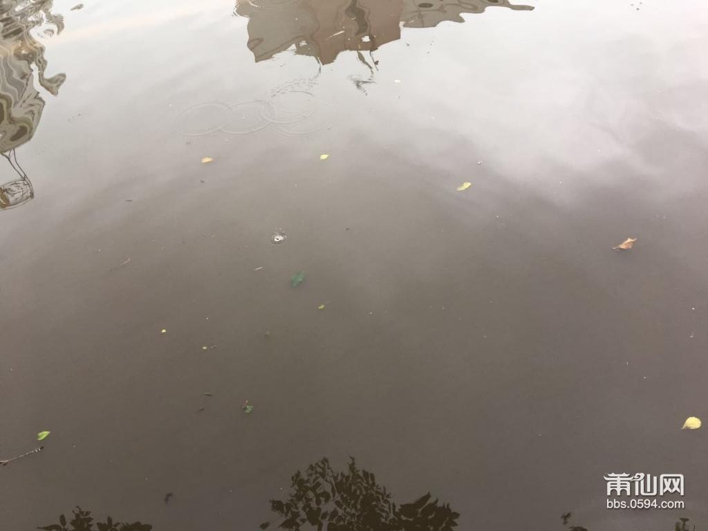 台风过后,涵江汽车站对面马路积水十分严重