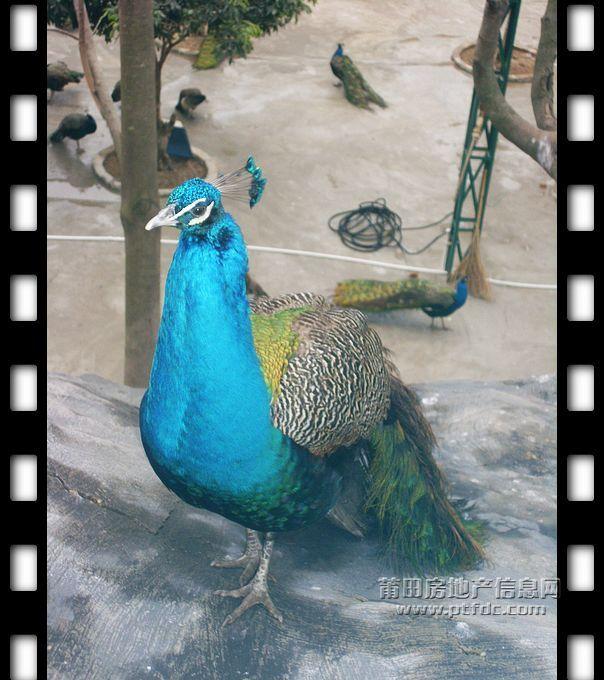 凤凰山公园动物写真
