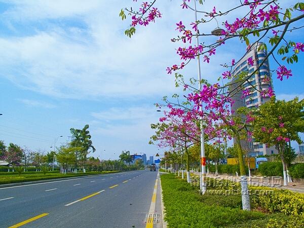 漳州水仙大街花季风景欣赏