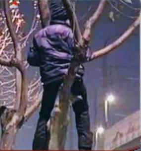 坐在树上的男生头像