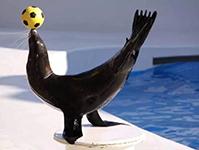 抢票啦!萌宠海狮空降莆田 海洋节狂欢相邀